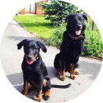 temoignage-educateur-canin-black-iako