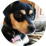 temoignage-educateur-canin-fidjy