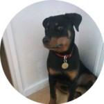temoignage-educateur-canin-rottweiler