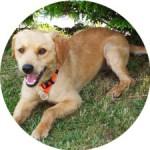 temoignage-educateur-canin-sammy